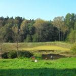 Von Bad Doberan über Althof zu den Hütter Klosterteichen und zurück